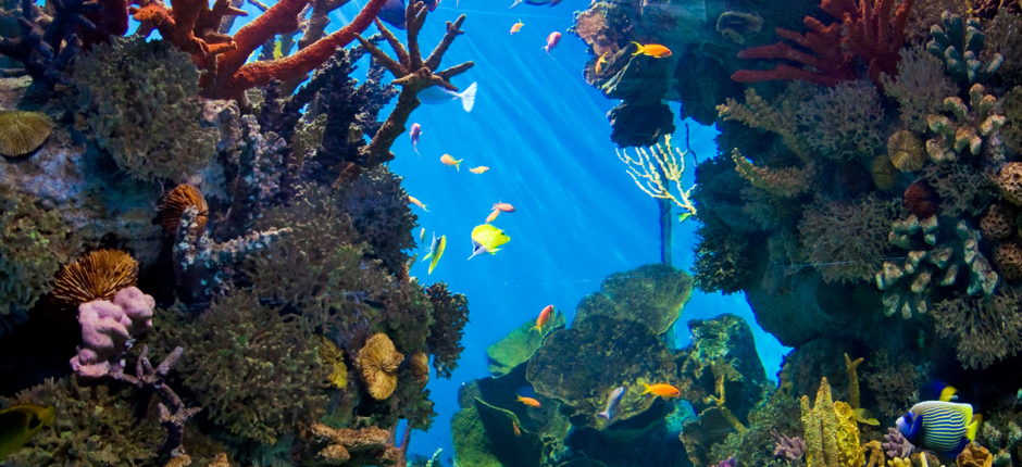 Aquaexotic, boutique d'aquariophilie : vente de poissons, conception et fabrication d'aquarium